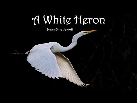 Learn English Through Story - A White Heron By Sarah Orne Jewett