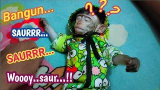Download saur saur.. membangun kan baby monyet pantai untuk sahur