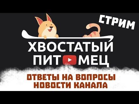Видео: СТРИМ 7: О Хвостатом Питомце / Новости канала / Ответы на вопросы / Просто общаемся