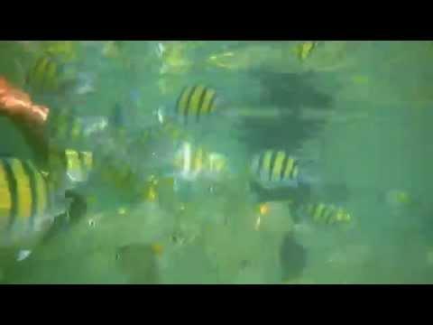 Feeding Fish @ Hikkaduwa BeachHikka Life Travelers Guide   www.hikkalife.com