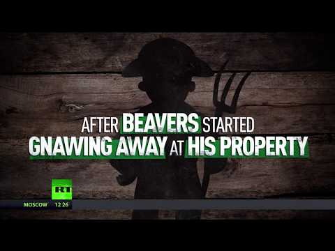 Hands off the Beavers! Landowner fails to sue animals gnawing his property