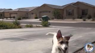 Самая умная собака в мире попала в книгу Гиннесса