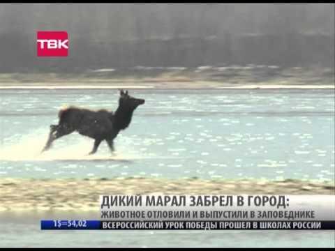 посёлок гончарово знакомства site ru