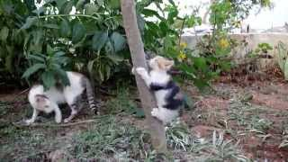 Mother teaching kitten how to climb a tree