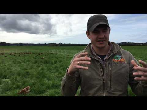 40,000 Laying Hens on Pasture at Alexandre Farms in California