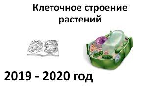 1. Клетка растений (6 класс) - биология, подготовка к ЕГЭ и ОГЭ 2020