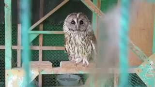 行徳野鳥観察舎を訪問して湿地を見学
