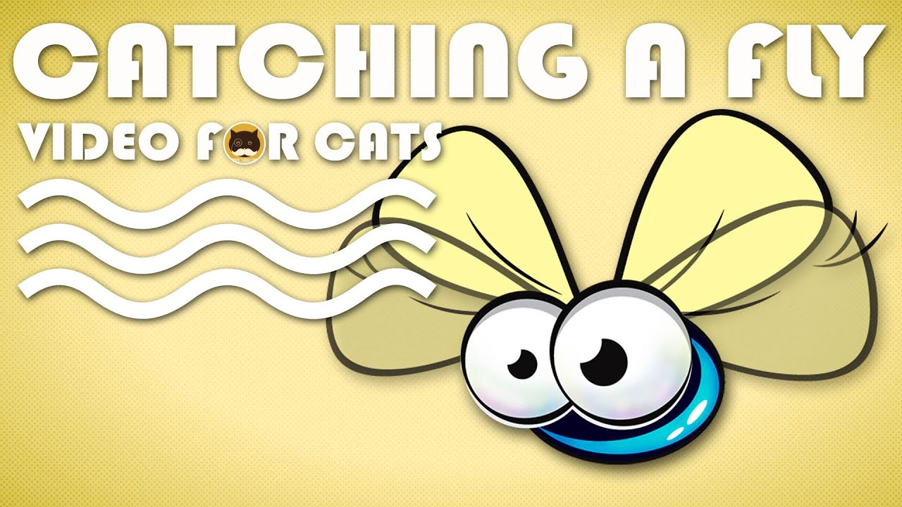 ENTERTAINMENT VIDEO FOR CATS. Cat Game on Screen. Catching a Cute Fly.