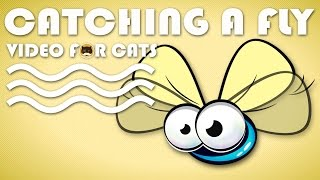 CAT GAMES - Catching a Cute Fly! Video For Cats Fly.