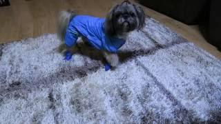 Комбинезон и Ботинки.Одежда для Собак с AliExpress.