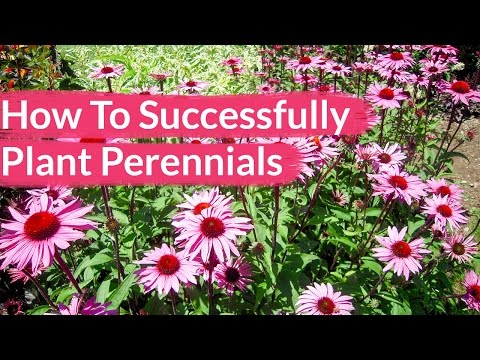 How To Successfully Plant Perennials / Joy Us Garden