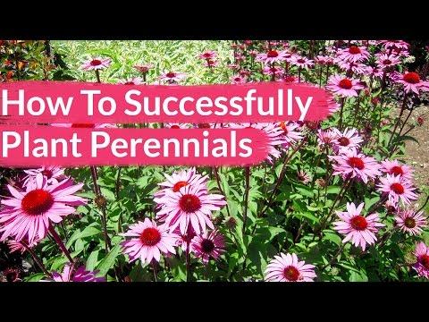 How To Successfully Plant Perennials / Joy Us Garden