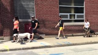 Rv Dog Training Seminar How To Dog Training