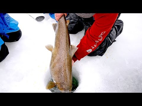Fishing for Monsters Under the Ice