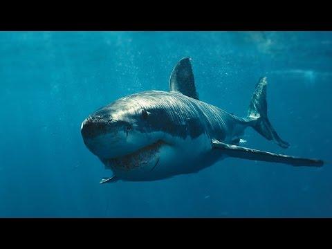 Белая Акула - Супер Хищник