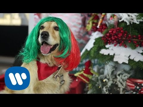 Sia Puppies Are Forever At Warner Music Italy Youtube