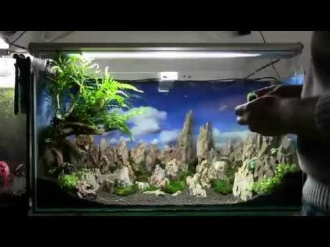 Hướng dẫn làm bể thủy sinh phong cách tự nhiên