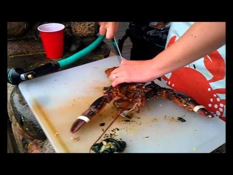 Kat kills some lobsters