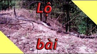 Té ngửa tìm ra nguồn gốc ảnh rắn hổ mây khổng lồ Núi Cấm