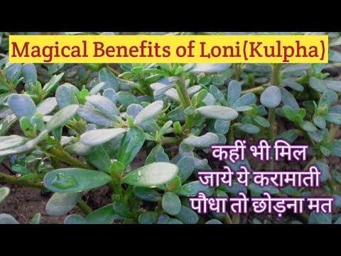 Loni (kulfa, purslane) and its magical benefits | कुलफा (लोनी) के करामाती फायदे | Loni grass