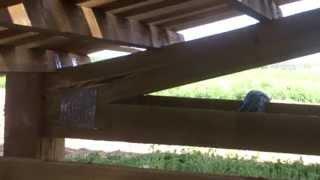 видео Стропильная балка: фермы деревянные, металлические, железобетонные, усиление стропил