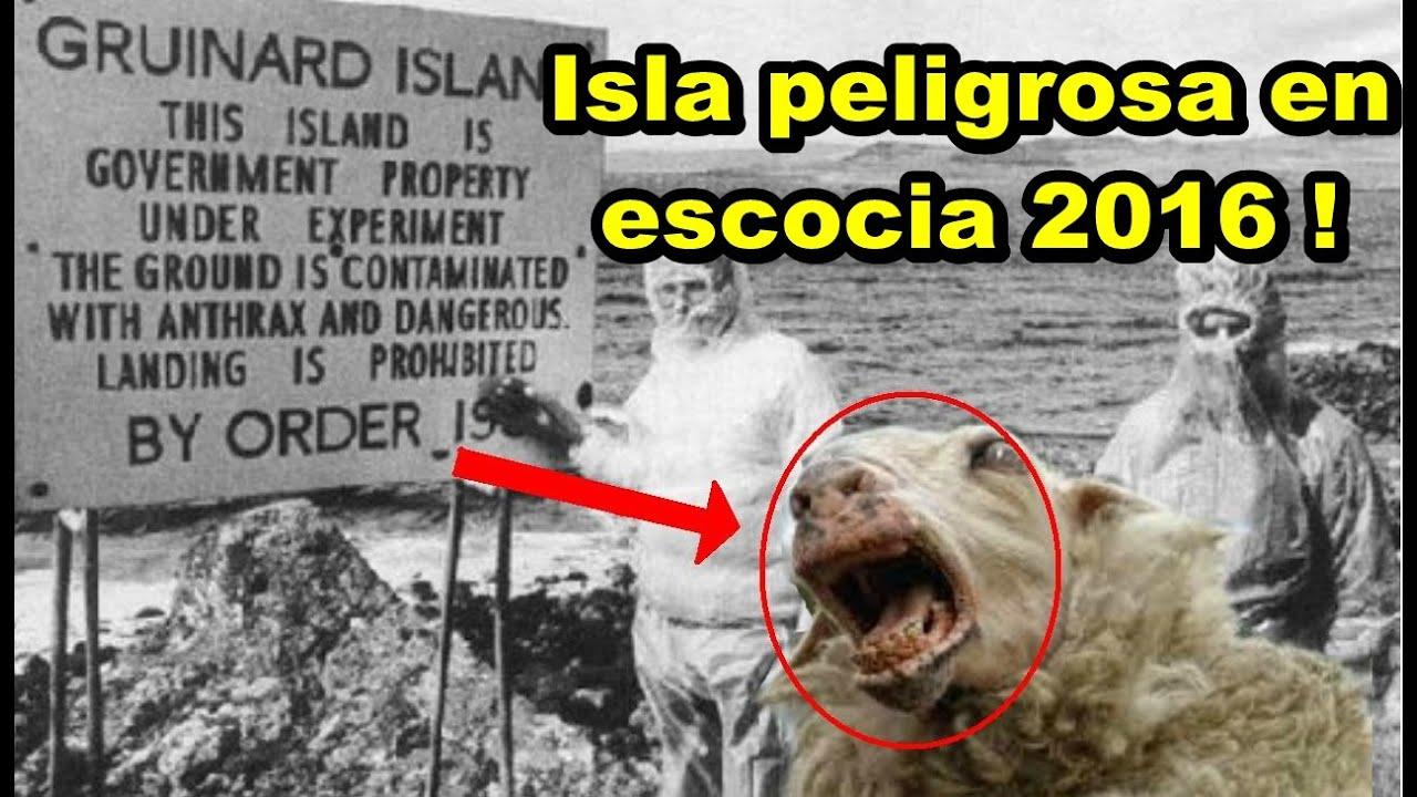 La isla mas peligrosa del mundo experimento con ovejas 2016 la isla mas peligrosa del mundo experimento con ovejas 2016 altavistaventures Choice Image