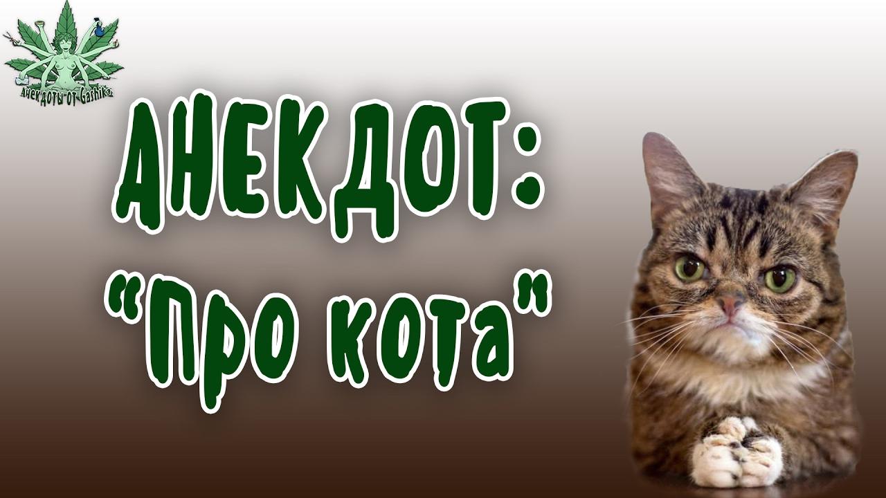 Кот лень анекдот