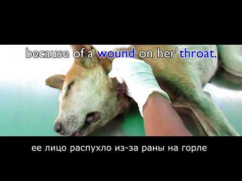 Сотни личинок извлекли из горла этой собаки
