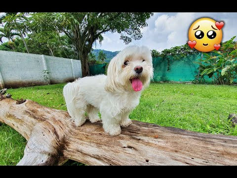 Cute Dogs ❤️Fun and AWESOME! 😎Compilation Part 1