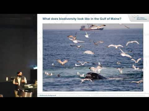 Biological Hotspots: Finding Birds, Fish and Plankton in the Gulf of Maine