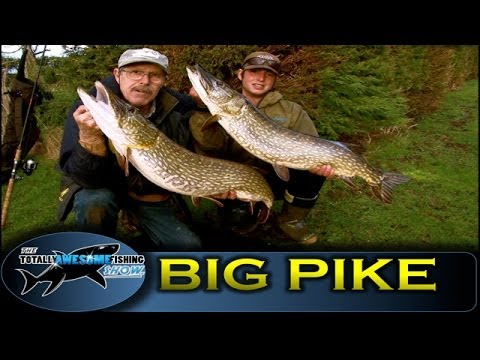BIG PIKE FISHING with DEADBAITS! - TAFishing Show