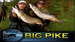 BIG PIKE FISHING with DEADBAITS! - TAFishing Show