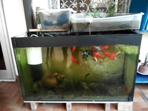Acquario pesci rossi doovi for Acquario per pesci rossi
