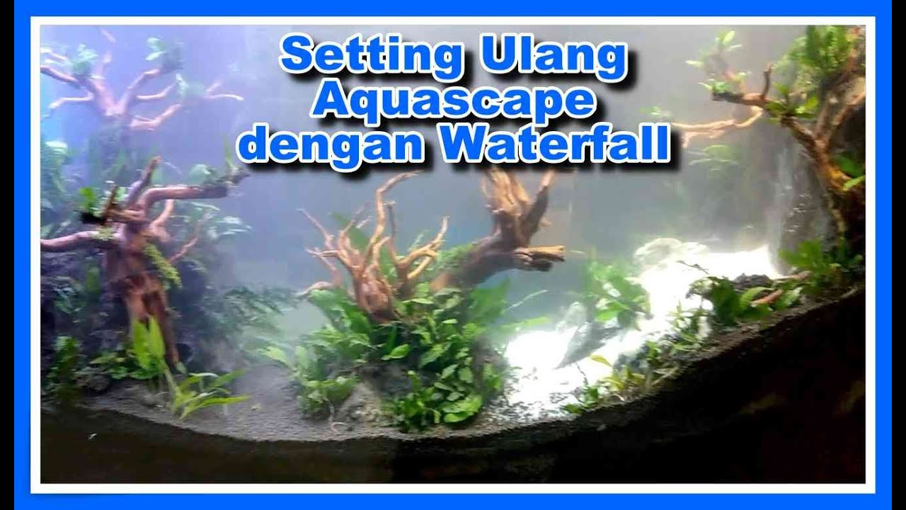 Setting Ulang Aquascape dengan Air Terjun - YouTube