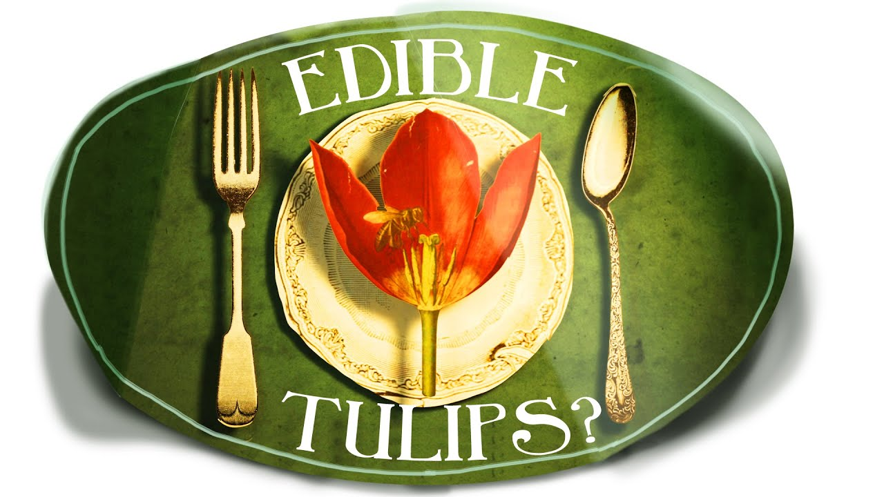 Tulips Are Edible Weird Tulip Facts Youtube