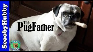 The Pugfather -- Dog Days #22