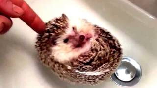 video in Funny animals 2014