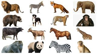 Learn Animals names with Pictures in English   Farm Wild Animals for kids