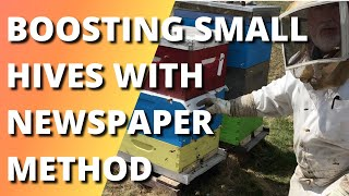 BOOSTING SMALL HIVES WITH THE NEWSPAPER METHOD; PROGRESS OF EXPANDED HIVES