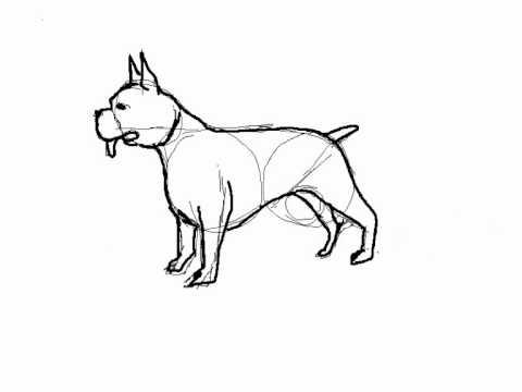 Como dibujar un perro boxer paso a paso - YouTube