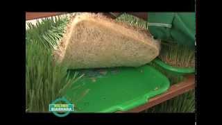 Hydroponics Farming in Kenya Teaser