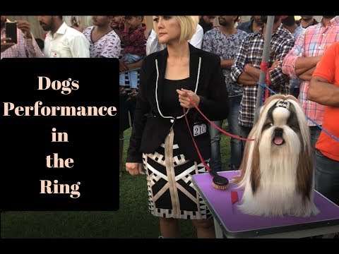 Kotakpura Dog show 2018 - Dogs Performance in the Ring - Bhola Shola Films