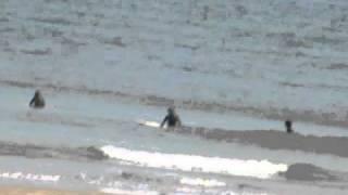 ここ小泉海岸は、サーフィンのメッカとして有名です。 (この動画の区域...
