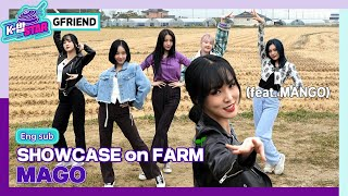 Download (ENG Sub) [K-BOB STAR2] EP.06 GFRIEND-MAGO I Showcase on Farm Full I 케이밥스타2 I 여자친구