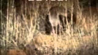 ovcular mesede