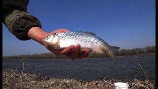 Начался ХОД ВОБЛЫ Астраханская ВОБЛА 2021 Рыбалка в СИЛЬНЫЙ ВЕТЕР Бешеный клёв воблы