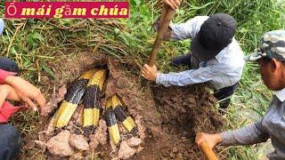 Phát Hiện Ổ RẮN MÁI GẦM CHÚA Khu Vực Bãi Rác Ven Sông Cửa Tiểu (Catch extremely poisonous snakes)