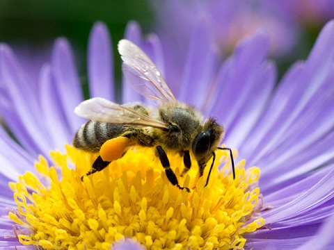 Bienenhaltung, Vermehrung