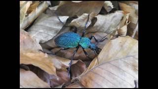 @...rare insects..@(редкие насекомые)