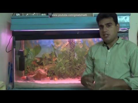 How To Change Aquarium Water | Gravel Cleaner For Fish Tank | Fish Tank Ka Pani Kese Change Karin